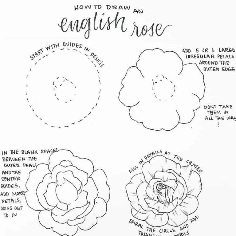 How to draw an english rose as a bullet journal doodle